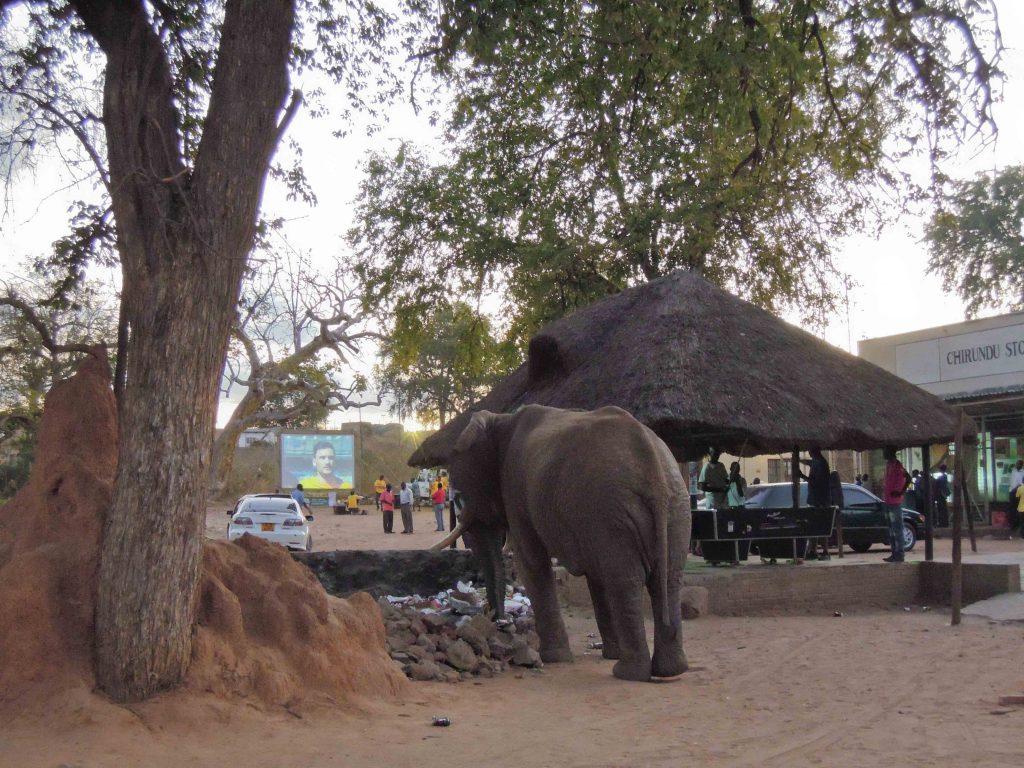 Day 23 – Chirundu…Elephants and Truck Drivers at the Border Crossing